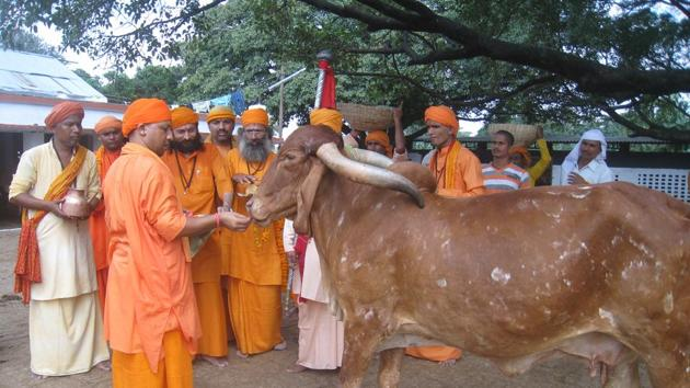 Uttar Pradesh chief minister Yogi Adityanath feeding cows at Gorakhpur. One of the private member's bills that Yogi Adityanath had introduced in Parliament includes one seeking a nationwide ban on the slaughter of the 'cow and its entire progeny'.(HT file photo)