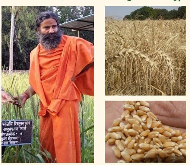 Yoga guru Ramdev claimed that researchers have developed newer varieties of wheat seed and chilli(Tweeter Photo)