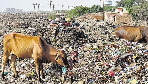 The city produces nearly 950 metric tonnes of daily solid waste, which gets dumped at a temporary landfill site near Pratap Vihar, on vacant land, roadside areas and plots.(Sakib Ali/HT Photo)