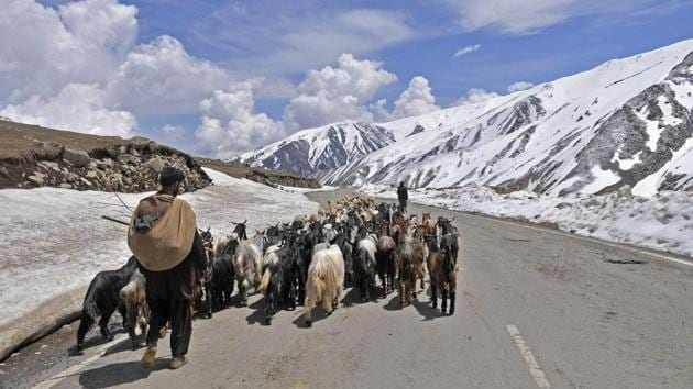 A member of the nomadic Gujjar-Bakarwal community with his flock of sheep and goats cross a road in the mountains through the famed Mughal Road.(Waseem Andrabi / Hindustan Times)