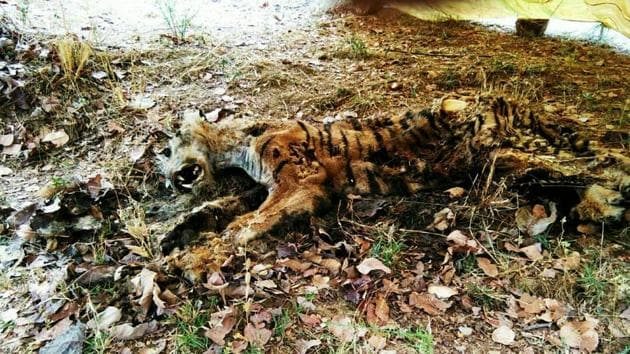 A post-mortem could not reveal the exact cause of death as the carcass was found decomposed near Palebarsa village in Chandrapur.(HT Photo)