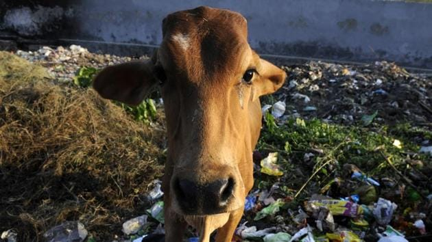 The men claimed to be 'gau rakshaks', but did not cite an association with any group or organisation, police said.(Sunil Ghosh/HT Representative Photo)