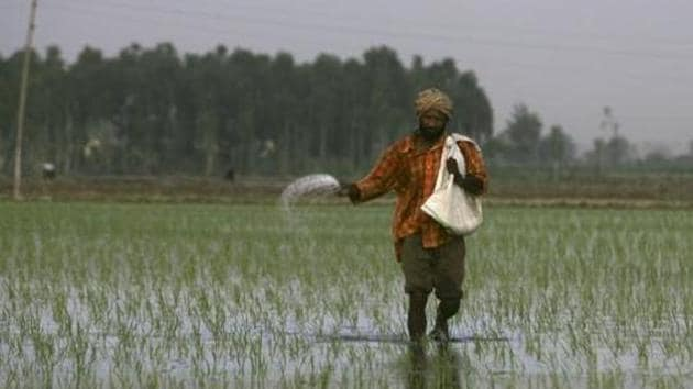 A farmer sprinkles fertilizers on a rice crop on the outskirts of Amritsar. Employment generation has been its lowest in 2015 in the past 25 years, and so did the number of landless farmers increase.(AP File Photo)