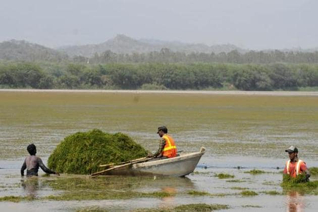 Weeds being removed from Sukhna lake on Thursday.(Karun Sharma/HT)