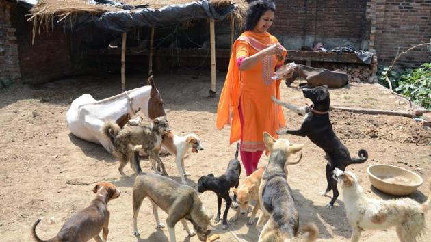 Shalini Agarwal Arora with her canine friends at her shelter house