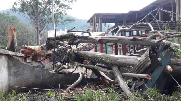 Many trees were uprooted in Mizoram as cyclone Mora hit the northeast on Tuesday.(HT Photo)