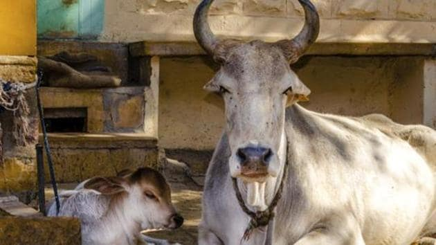 All eight North-eastern states except Tripura are among the top 10 most frequent consumers of beef or buffalo in the country.(Representative image)