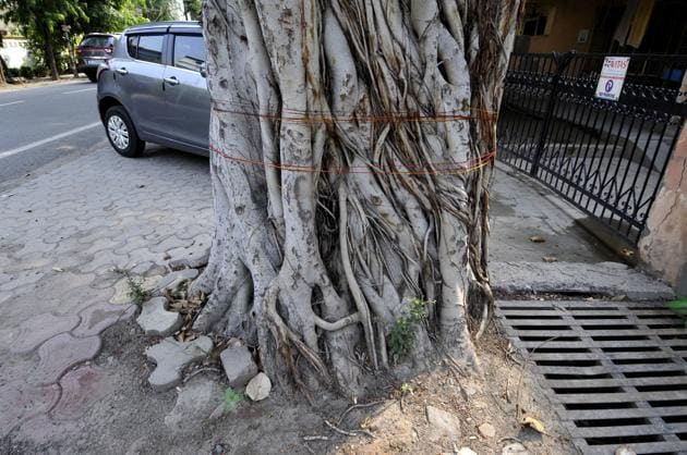 The UP forest department, in many cases, do not get to know about tree felling instances as there are no complaints lodged.(Sunil Ghosh/HT PHOTO)