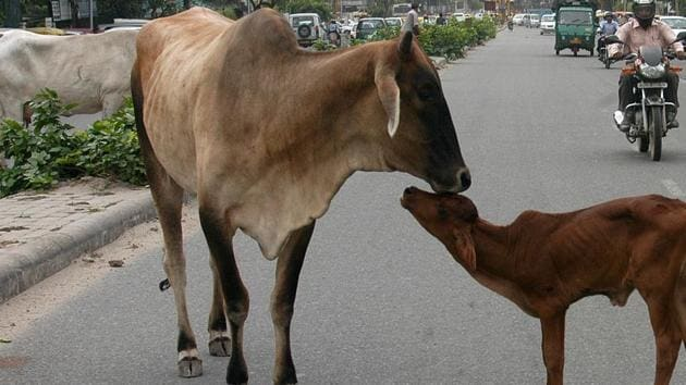 A stray cow with her calf in the middle of a street New Delhi.(HT File Photo/ Representative image)