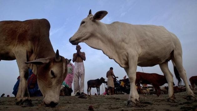 Self-styled cow protectors thrashed a Muslim man on allegations of possessing beef at Jalalkheda town in Maharashtra.(AP File Photo / Representational)