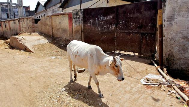 A cow walks past a closed slaughter house in Allahabad.(REUTERS)