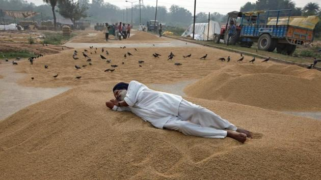 A farmer rests on a heap of harvested rice crop at a wholesale grain market in Chandigarh.(Reuters File Photo)
