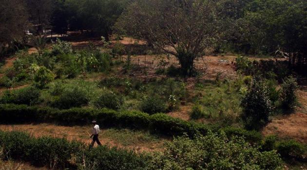 Maharashtra Nature Park, popularly known as Mahim nature park, is located near Dharavi bus depot.(HT file)
