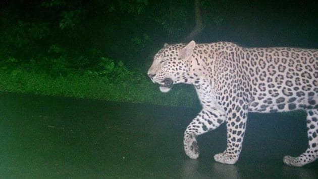A CCTV image of the leopard in the area.(HT Photo)