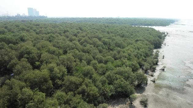 Mangrove forests grow in creeks, estuaries, bays and lagoons and in inter-tidal areas.(HT FILE)