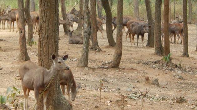 Sambars at Kalimati deer park in Khunti(HT File Photo)