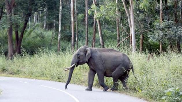 The new wildlife plan shifts approach from protecting wildlife areas to conserving entire landscape.(K Sasi/HT File Photo)