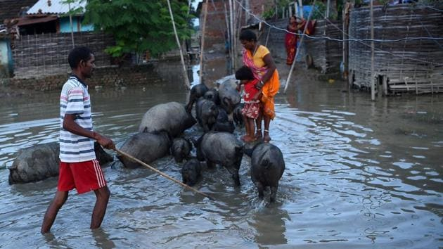 A Nepalese man guides his pigs through floodwaters in Janakpur, 300 km southeast of the capital Kathmandu, on August 14, 2017. Nearly 200 people have died and thousands have fled their homes as monsoon floods swept across Nepal, India and Bangladesh and the toll could rise as the extent of the damage becomes clear. Three days of relentless downpours sparked flash floods and landslides that have killed 91 people in Nepal, 73 across northern and eastern India and 22 in Bangladesh.(AFP)
