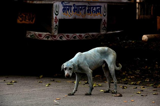 HT first reported on August 11 about the dogs mysteriously turning blue, after residents spotted the canines(HT Photo)