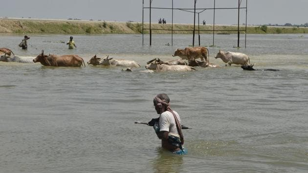 A villager along with the herd of cows crosses a flooded road in Malda in West Bengal on August 24. The death toll from floods sweeping South Asia has climbed above 1,000, officials said August 24, as rescue teams try to reach millions stranded by the region's worst monsoon disaster in recent years.(AFP Photo)