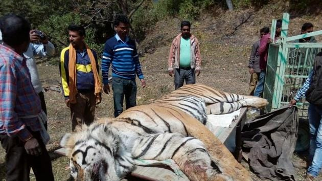 In March, a tiger was pinned down by an earth mover during a botched rescue attempt outside the Corbett reserve at(HT File)