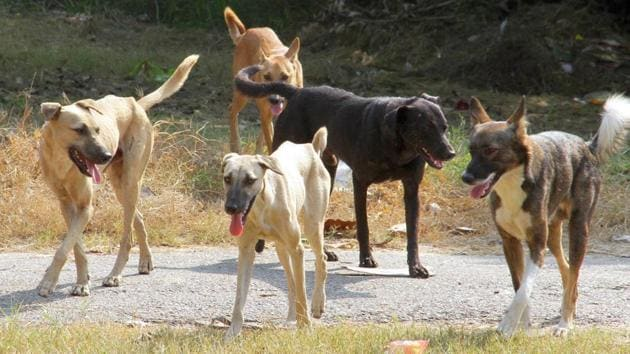 Dogs can be seen roaming in the OPD corridor and other places on the hospital campus.(File)