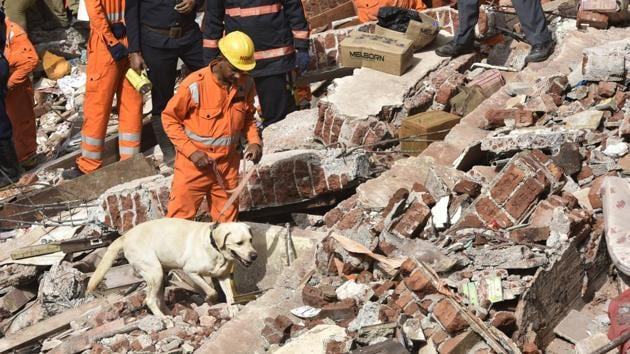 Sniffer dogs at the site of the collapse on Thursday.(Anshuman Poyrekar/HT)