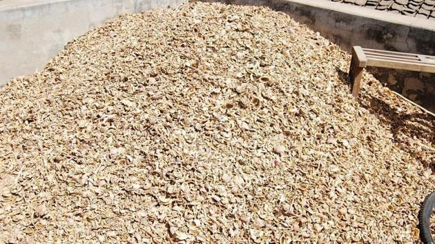 The details gathered from police have revealed that around 1,164 kg poppy husk has been recovered in the past six months andsix 'peddlers' from Jammu and Kashmir besides five locals have been arrested.(Representative image)