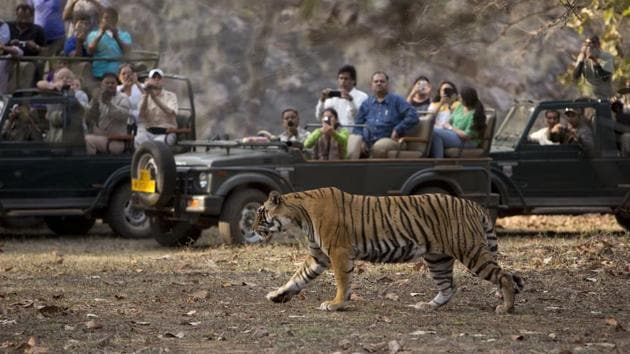 Tourists catch a glimpse of a tiger at Ranthambore.(Shutterstock)