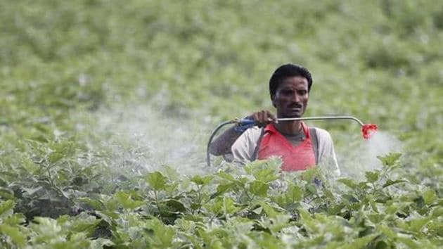 A farmer sprays pesticide in the cotton field at Pandharkawada in Maharashtra.(HT File Photo)