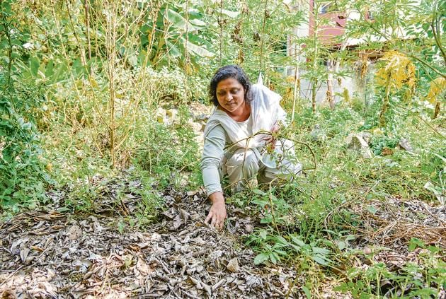 Sujata Naphade, the ardent gardener who cultivated various crops using only dry leaves as compost, at her organic farm located near Pashan-Sus road.(Sanket Wankhade/HT PHOTO)