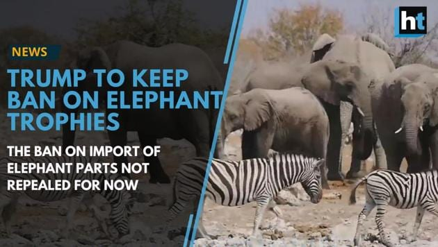 Trump to keep the ban on imports of elephant parts for now