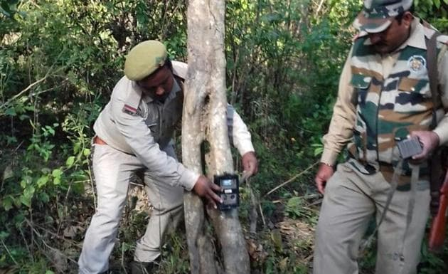 Forest employees put up camera traps.(HT Photo)