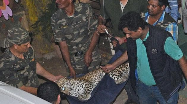 """Residents told HT the animal was first spotted at 6.30am near Sher-e-Punjab Gurudwara. """"We informed the police once the animal moved towards the Sher-e-Punjab colony(SATYABRATA TRIPATHY/HT)"""