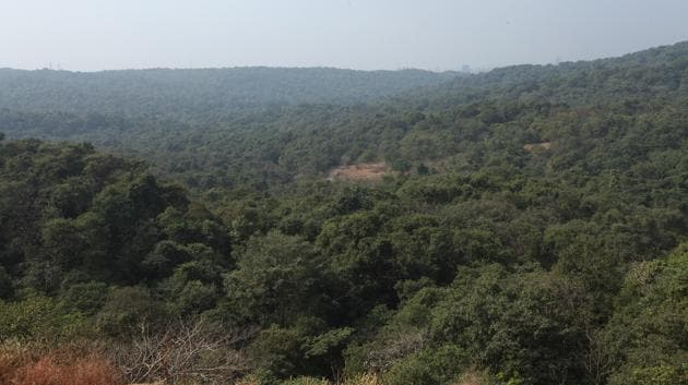 The forest land lost in the last three years is roughly equivalent to the area of Mumbai's island city, which is 65sq km (Brihanmumbai Municipal Corporation data).(HT File)
