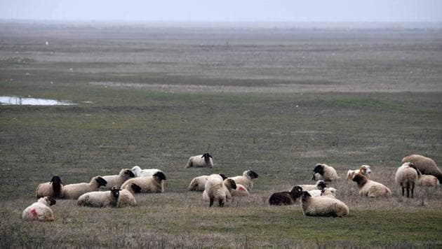A picture taken on January 15, 2018 shows sheep in a field nearby the US Deveselu military base hosting a anti-missile shield in the village of Stoenesti, southern Romania.(AFP Photo)