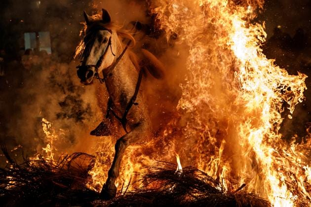 Horses are made to jump through flames at this controversial Spanish festival. See...