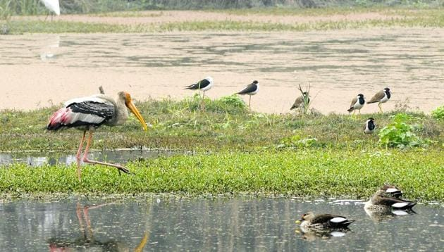 World Wetlands Day is celebrated on February 2 of every year to spread awareness about the need to protect wetlands.(Burhaan Kinu/HT File Photo)