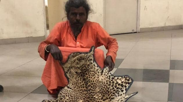 The leopard skin rug is 73 inches long and 36 inches broad, officials said.(wildlife department)