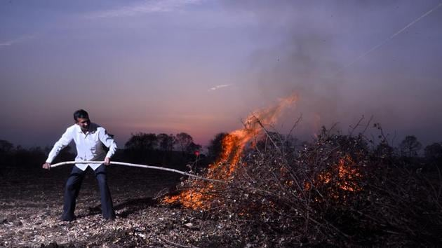 Ramdas Turi from Yavatmal district sets ablaze his pink bollworm-infested cotton crop spread across six acres. Farmers have been asked to burn down their crop to avoid another outbreak.(Anshuman Poyrekar/HT Photo)