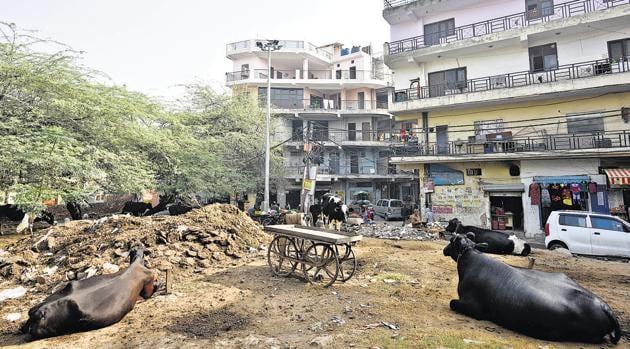Residential area at Lado Sarai in New Delhi.(Sanchit Khanna/HT PHOTO)