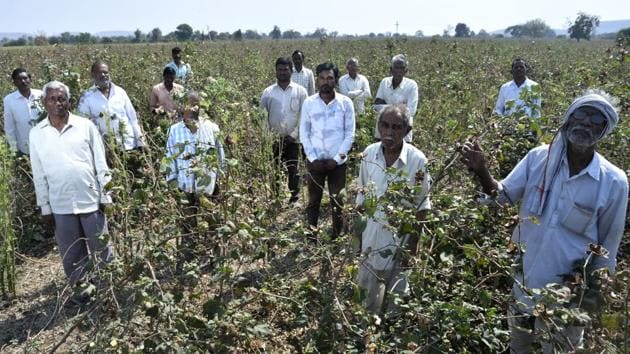 Farmers from Wadgaon village in Yavatmal district say the worm outbreak has not spared a single cotton farm in their village. They has sought swifter loan-waiver implementation and compensation for cotton losses.(Anshuman Poyrekar/HT Photo)