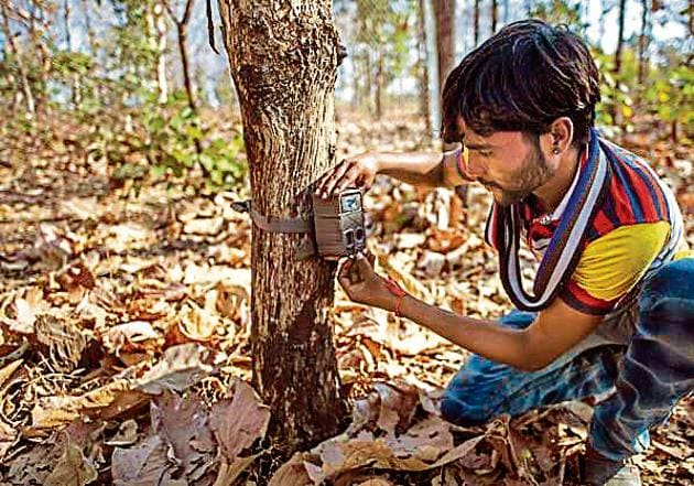 The number of tigers in Uttarakhand will be estimated by camera traps and satellite imagery. According to the All India Tiger Estimation (census) in 2014, there were 340 tigers in the state.(HT File Photo)