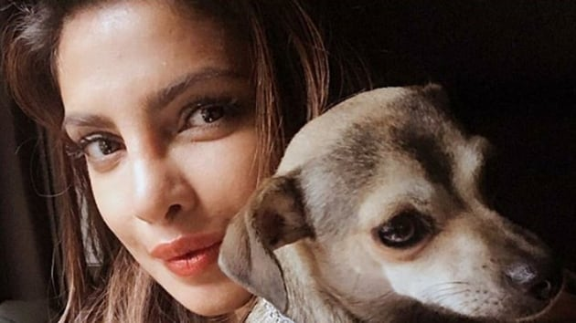 Priyanka Chopra frequently posts pictures with her dog on social media.