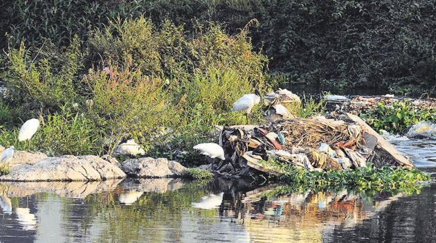 The massive dumping of garbage and a heavily polluted river are among the other reasons behind the reducing frequency of birds visiting the spot.(Shankar Narayan/HT PHOTO)