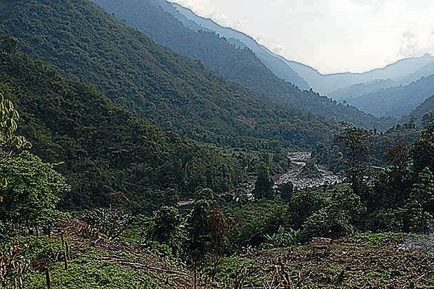Jhum cultivation in Arunachal Pradesh.(Hindustan Times Media)