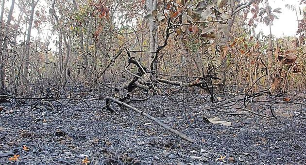 Friday's fire at Yeoor destroyed trees and covered the area with soot.(Praful Gangurde)