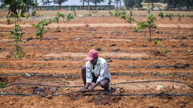 A farmer prepares a drip irrigation line in a tomato field in Karnataka, March 14. In both India and China, the lion's share of annual water withdrawal goes to irrigation(Bloomberg)