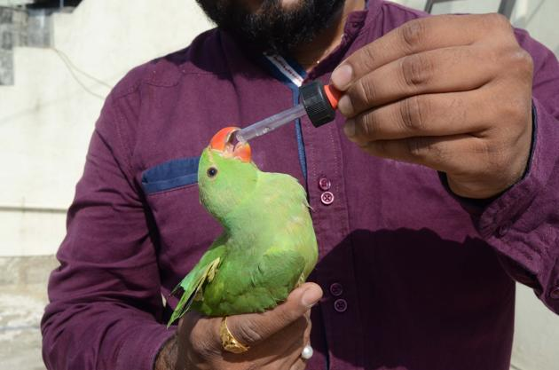 Bird lovers in the city have been appealing to residents to immediately alert them if they find a bird dehydrated.(HT PHOTO)