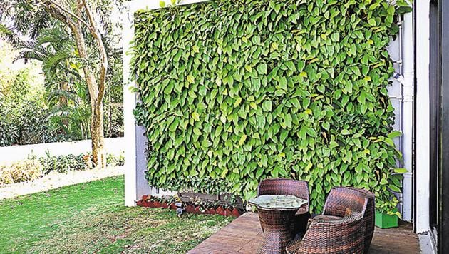 A vertical garden is energy efficiency and creates wind protection during winter months .(Shankar Narayan/HT Photo)
